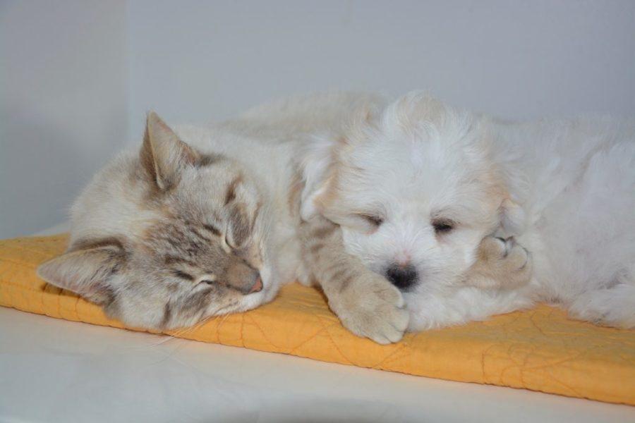 The Unbelievable Advantages of Drug Treatment Centers that Allow Pets